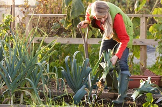 Allotments could be key to sustainable farming