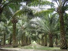 India's Nov-Oct palm oil imports to rise 16% to 9 3 million